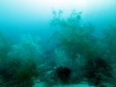 beautiful underwater garden