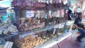CUTE lil chickies & duckies
