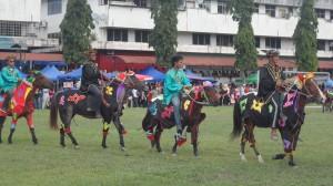 Beautifully dressed horses